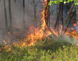 Fire in PIMA LEPA_JBarnes_250x195